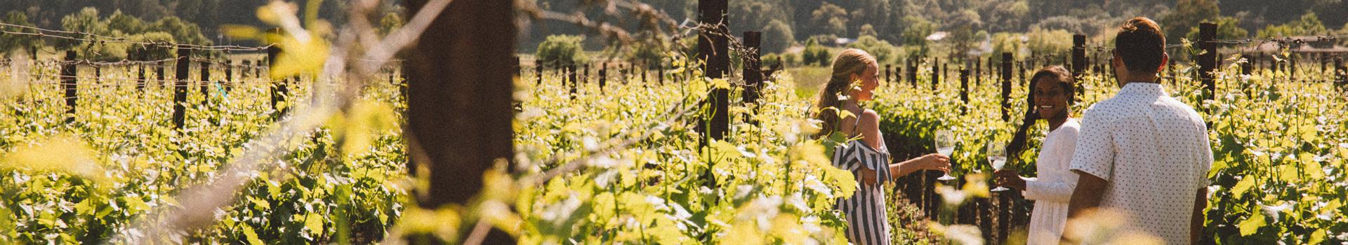 Provenance Wines